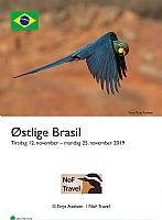 Brasil Atlanterhavsskog