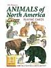 Nord-Amerikanske dyr - Animals of North America