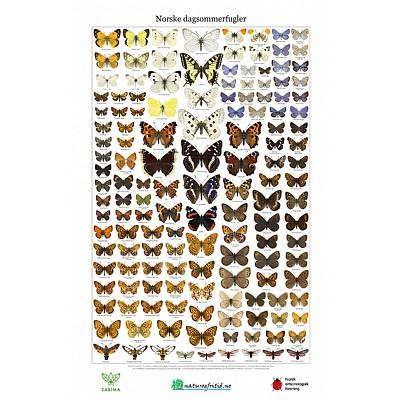 Norske sommerfugler, to plakater