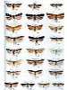 Microlepidoptera of Europe vol. 3